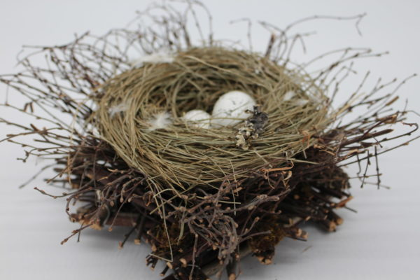 Birds Nest with 2 eggs close-up