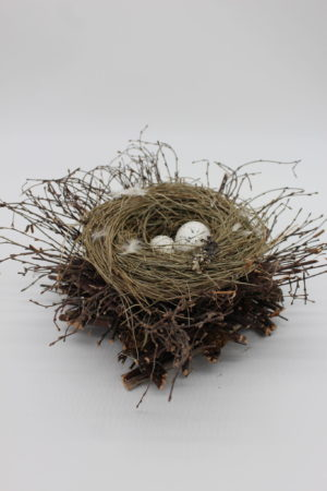 Birds Nest with 2 eggs